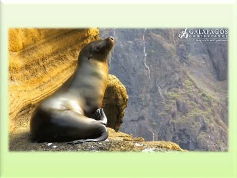 Islas Galápagos,que ver en Islas Galápagos,como ir a Islas Galápagos,buceo en Islas Galágos,reserva marina,
