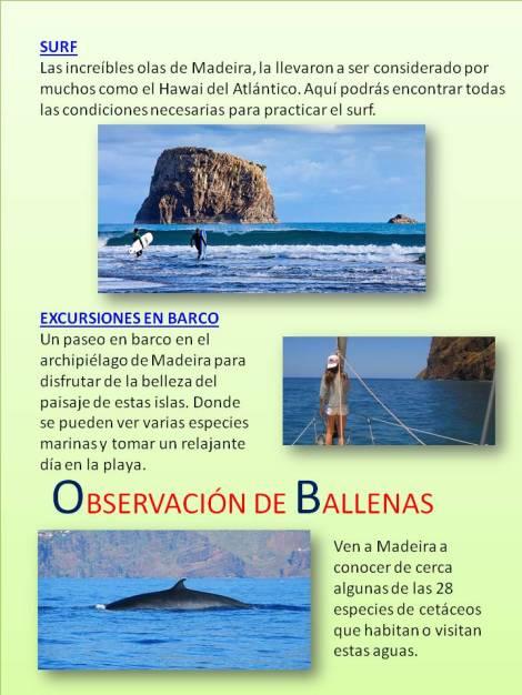 Surf, observación de ballenas, navegación